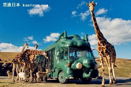 其他 >> 正文   九州自然动物园非洲冒险公园是日本为数不多的野生